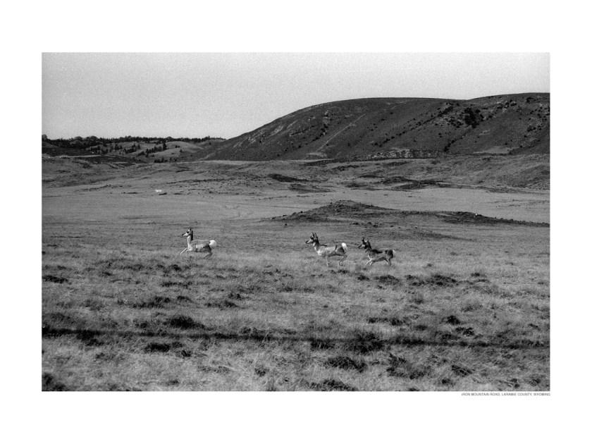 Antelope, Iron Mountain Road, Wyoming