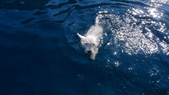 diogène découvre la mer