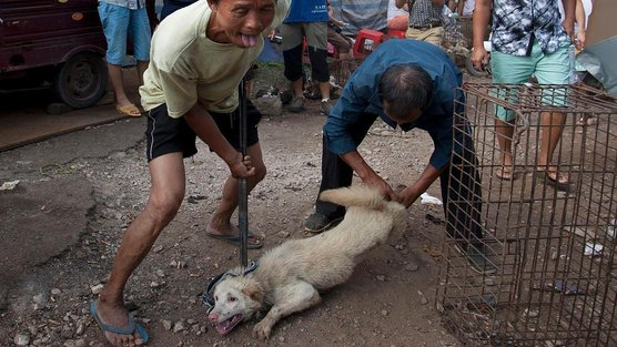 dog-carved-up-while-alive-china-yulin-festival