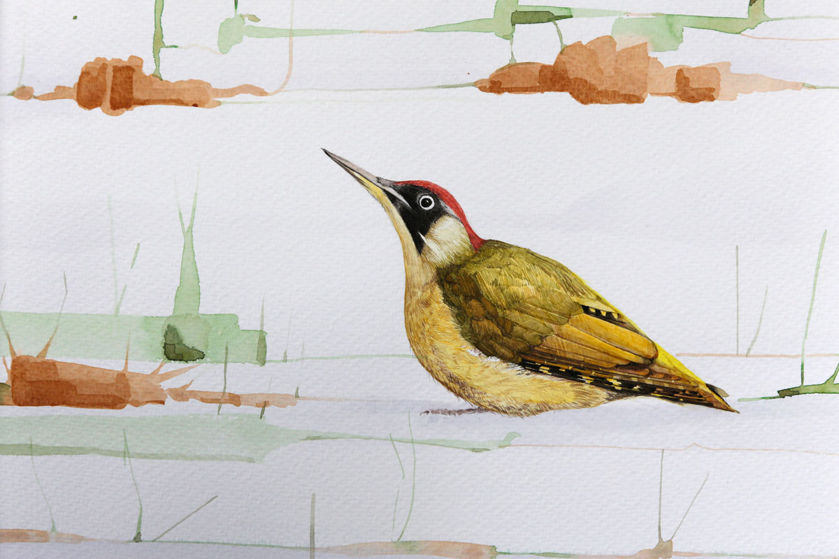 Watercolour painting of a Green Woodpecker, Picus Viridis