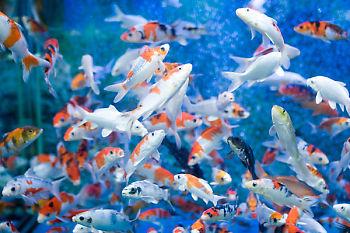 Fish In Large Tank