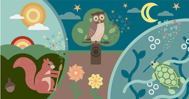 A digital illustration of a squirrel an owl and a sea turtle, each holding mascara wands with magic dust coming emanating from the tip of the wand.