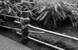 butchart bamboo fence