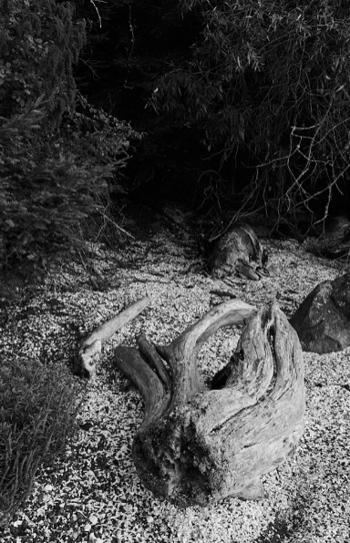 bedwell beach log