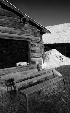 hogue ranch skull no 2