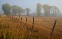 laramore fence fog