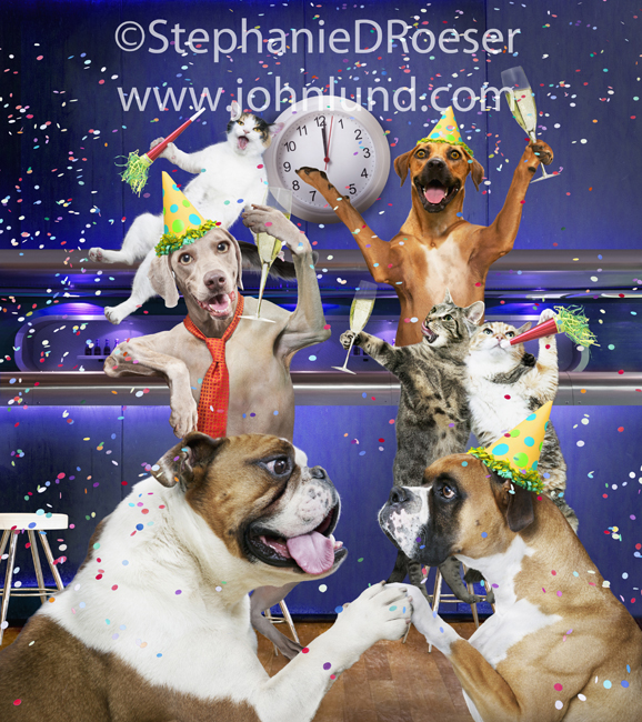 Picture Of Celebrating Cats And Dogs At A Party