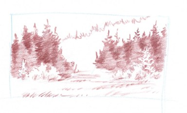 conifer forest thumb 6