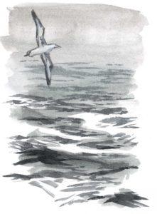 albatross sea 2_1