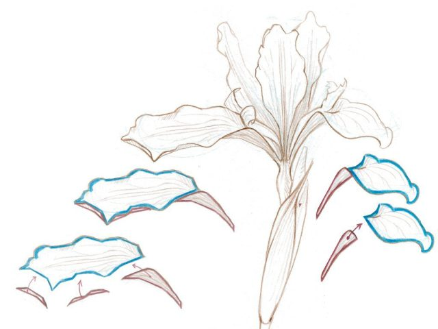 Drawing Plants 2.034-003