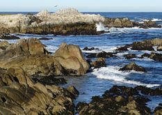 284px-Rocks_at_the_Asilomar_State_Beach