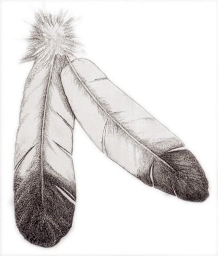 2015. Pencil Drawing feathers