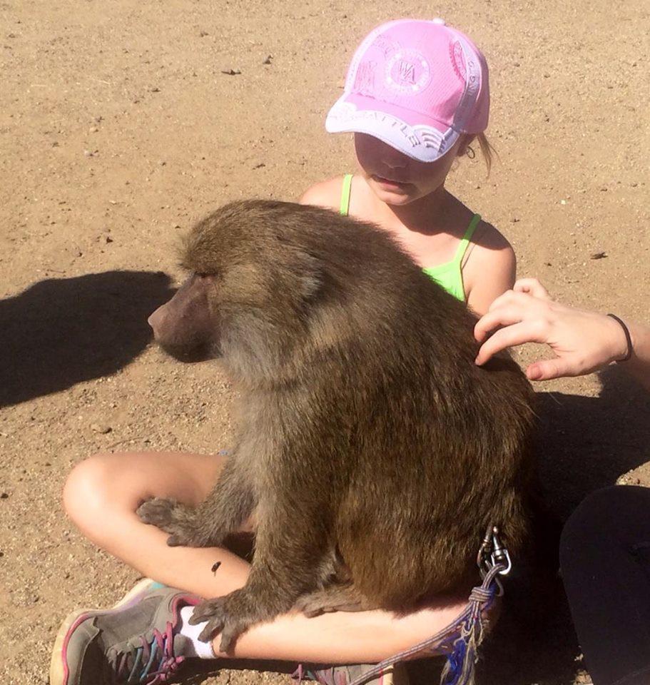 The friendly baboon at Animal Tracks.