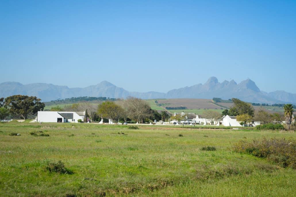 Vergenoegd Wine Estate in Stellenbosch