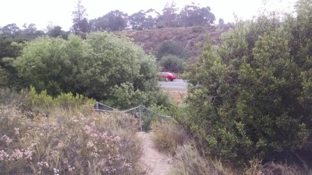 Beautiful trees and shrubs with many birds are found in Florida Canyon, but loud and dangerous cars diminish the area.