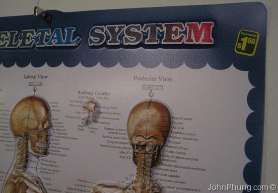 skeletal-system-3D-poster-02