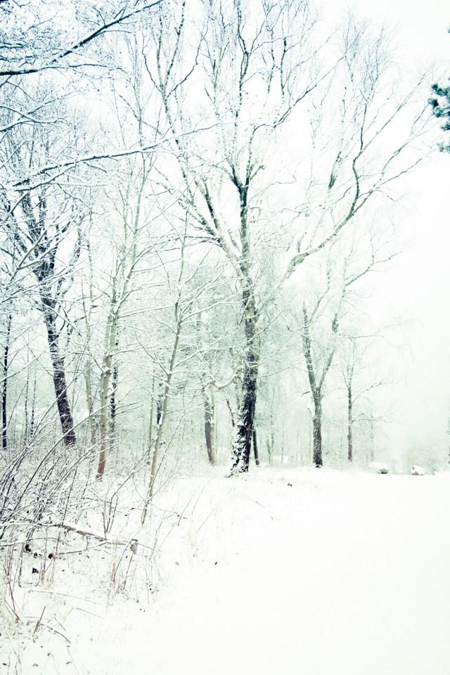 Vinter.. igen-5