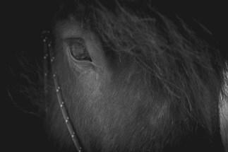 häst öga fotografi