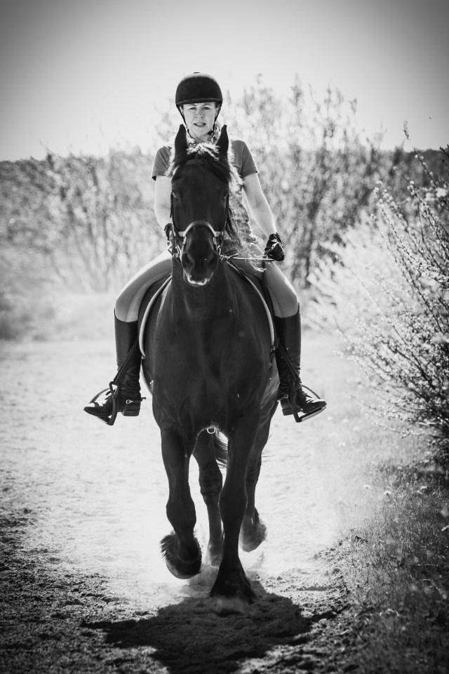 Hästbild halmstad