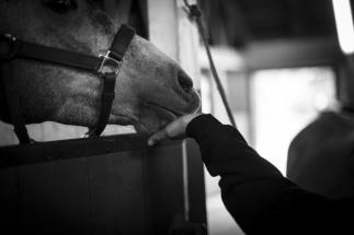 Fotografering med Sandra Wersch och hennes hästar