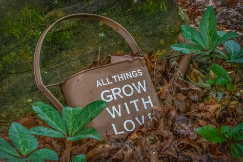 All Things Grow With Love Cynthia McCoy