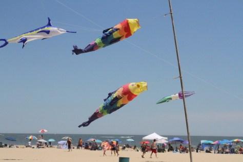 Susan K. Friedland Fantastic Flying Fish