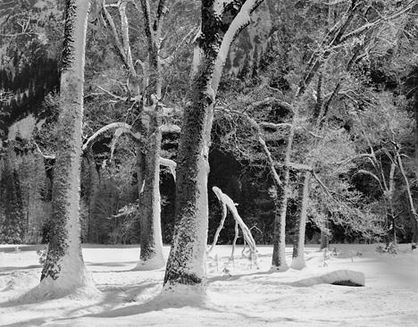 Trees In Snow, Winter by John Sexton