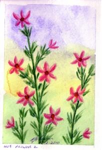 409 FLOWER 2