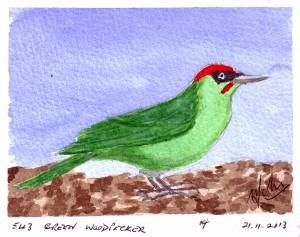 543 GREEN WOODPECKER