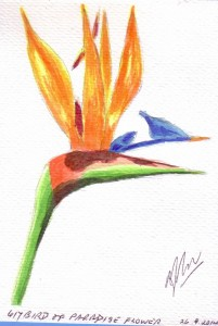617 BIRD OF PARADISE FLOWER