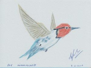 825 HUMMINGBIRD