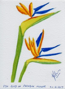 874 BIRD OF PARADICE FLOWER