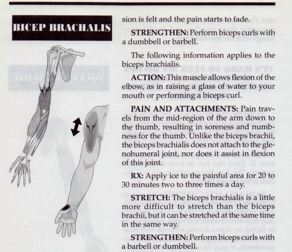 Flexion Arm Muscles