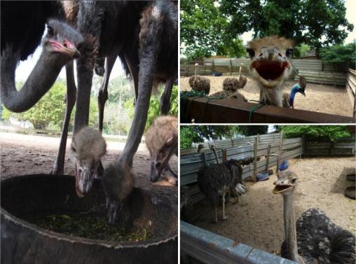 cute-ostrich-min