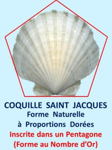 coquille stjacques
