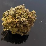 NEW!!! GREEN MONSTER  - SPECIAL PRICE $90 oz!