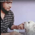 Funny – Dog help to count the money