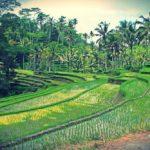 Ubud, Bali – Indonésia   Guia e Dicas de Viagem