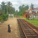 O final. Sri Lanka e a certeza de um regresso.