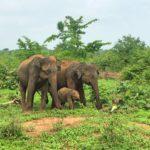 Dias 12 e 13. Into the wild em Udawalawe.