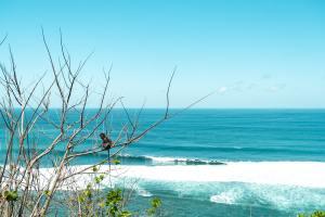 Bali : Itinéraire, 15 jours sur l'île des Dieux | Jolis Carnets
