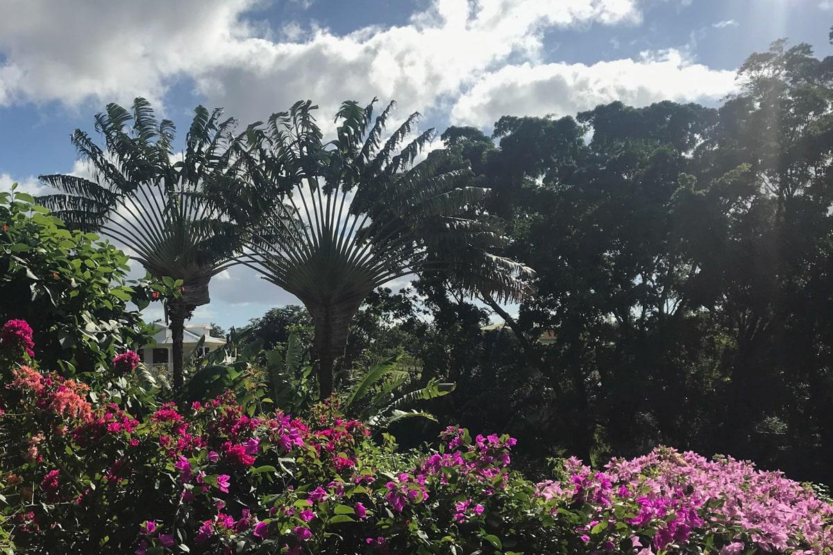 Guadeloupe : mes incontournables pour visiter l'île papillon - jardin botanique de Deshaies | Jolis Carnets