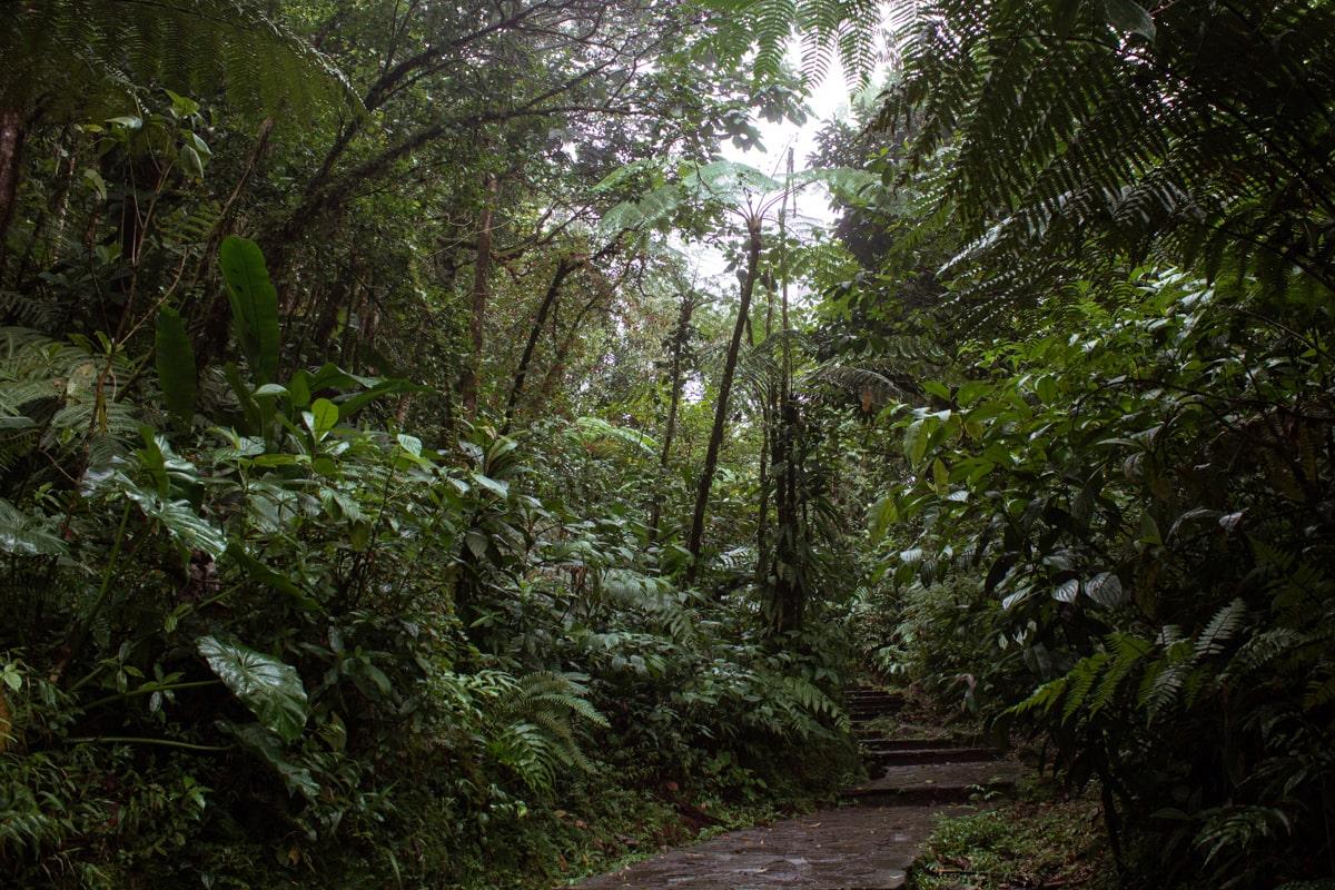 Guadeloupe : mes incontournables pour visiter l'île papillon - chute du Carbet | Jolis Carnets
