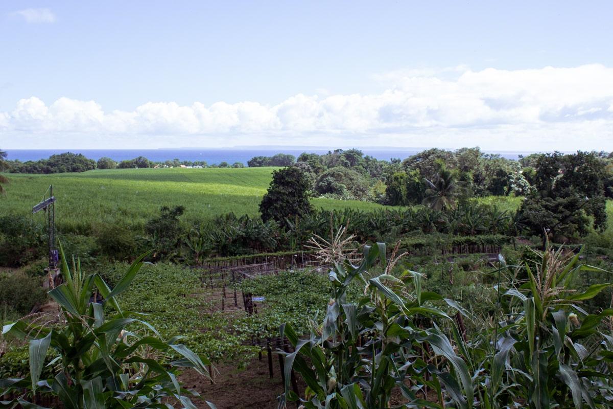 Guadeloupe : mes incontournables pour visiter l'île papillon - rhumerie Longueteau | Jolis Carnets