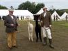 alpacas (3)