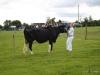 wensleydaleshow2011-7
