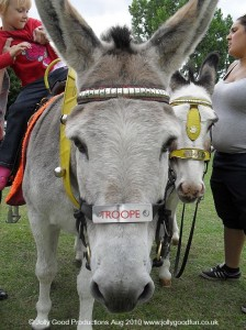 Mark Iresons Donkeys