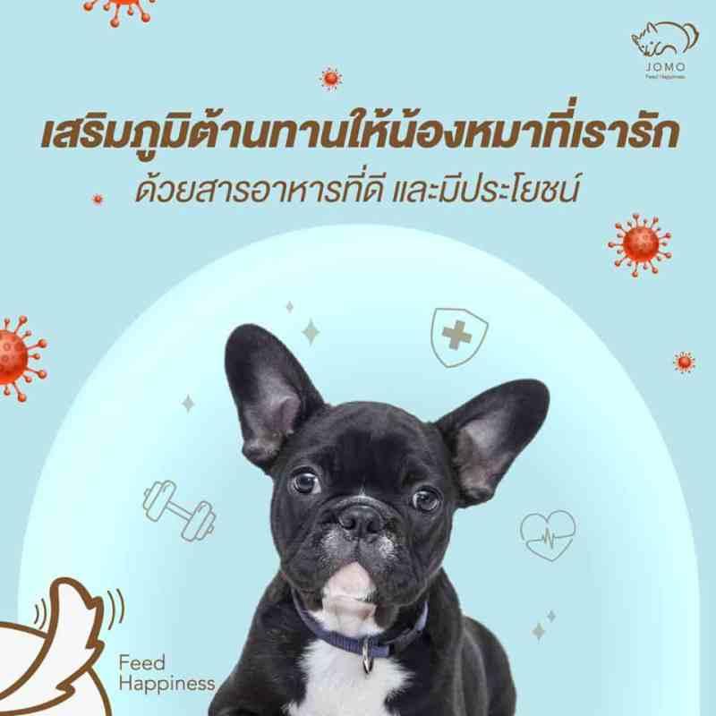 ดูแลสุขภาพน้องหมาให้พ้นโรคไตด้วยอาหาร