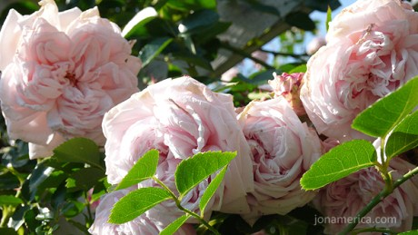 The arbor is covered with roses and other flowers.