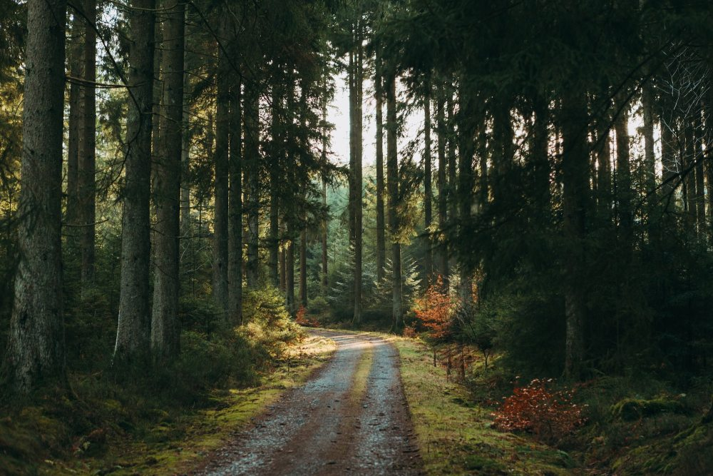 Jonas Denil Forest Unsplash